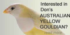 Read about Don's Australian Yellow Gouldian