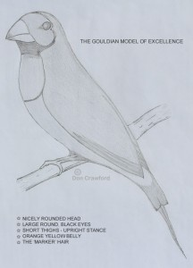 The Gouldian Model of Excellence